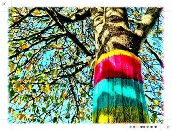 Sweater Tree in Precita Park, SF